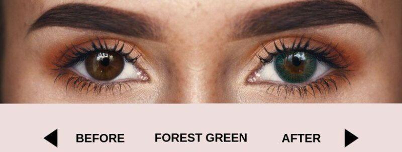 before forest green dark 4   Elegant Optic